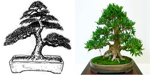 Bonsai estilo informal vertical