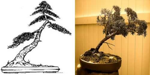 Bonsai estilo inclinado