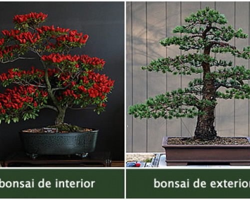 Bonsai de interior vs bonsai de exterior descubra as for Bonsais de interior
