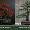 Bonsai de interior vs. bonsai de exterior